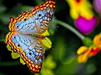 Nằm mơ thấy bướm bay vào nhà là điềm báo gì?