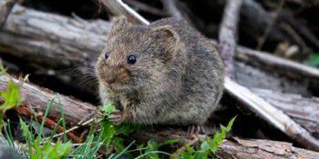 Nằm ngủ mơ thấy chuột cắn có ý nghĩa gì, báo hiệu điều gì